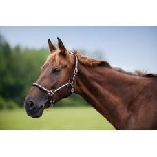 Nylonová ohlávka na koně proužkovaná v čoko-modré barvě a velikosti full
