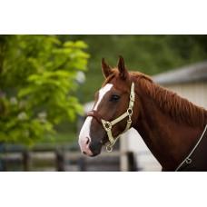 Ohlávka pro koně de luxe podložená fleesem pro maximální pohodlí