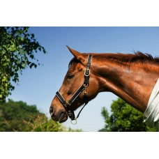 Ohlávka na koně Riding World v černo/šedé barvě a velikosti extra full