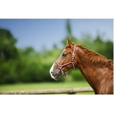 Ohlávka nylonová na koně  s přezkami v hnědé barvě a velikosti full
