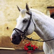 Uzdečka na koně Norton, kožená, v černé barvě a velikosti full
